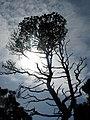Pacific Rim National Park - Bog Trail (3670706661).jpg