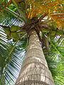Palmtree Curacao.jpg