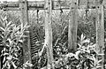 Paolo Monti - Serie fotografica (San Giovanni in Persiceto, 1972) - BEIC 6347424.jpg