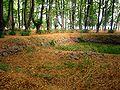 Park Dranske-Lancken - Senke 4.jpg