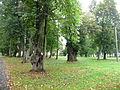 Park pałacowy w Pilicy, woj. śląskie.JPG
