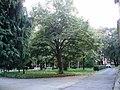 Park u Erdeviku.jpg
