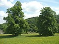 Parkland trees off Rochdale Road, Triangle, Sowerby - geograph.org.uk - 985338.jpg