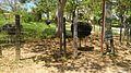 Parque Temático Hacienda Nápoles 52.jpg