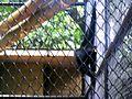 Parque Zoobotânico do Museu Paraense Emílio Goeldi-06.jpg