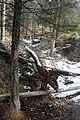 Passeio em Banff 2019 (7396).jpg