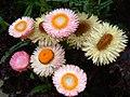 Pastel flowers (36618303).jpg