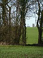 Path through gap in a high hedge - geograph.org.uk - 1598111.jpg