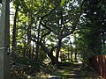 Path to Station Approach - Solihull - trees (8012155325).jpg