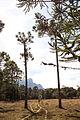 Patrimonio do matuto - serra do papagaio-5.jpg