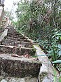 Paved Steps Along the Nature Trail.jpg