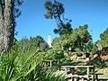 Pedregales picnic.jpg