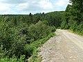 Penllyn Forest 3 - geograph.org.uk - 1399267.jpg