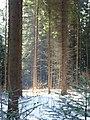 Pieninský národní park, únor 2014 (4).JPG