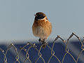 PikiWiki Israel 37802 A bird on a wire.jpg