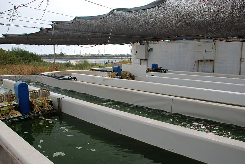 Maagan Michael fish farm