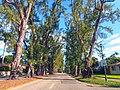 Pine Tree Drive Miami Beach - John S Collins 03.jpg