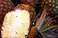 Pineapple mg 3827.jpg