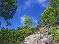 Pinos en la Roca - panoramio.jpg