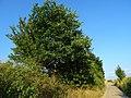 Pirna, Germany - panoramio (506).jpg