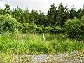 Plantation, Kirkstown - geograph.org.uk - 1975655.jpg
