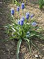 Plants in Donetsk 90.JPG