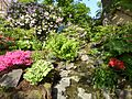 Plants of Tivoli Gardens 11.jpg
