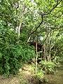 Polonnaruwa, Sri Lanka - panoramio (34).jpg