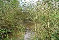 Pond by the footpath, east of Hill Hoath, south of Chiddingstone - geograph.org.uk - 1262431.jpg
