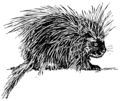 Porcupine 2 (PSF).png