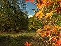 Praha, Dejvice, Nad Mlýnem, podzimní les.JPG