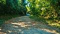 Praia do Camburi, Unidade de Conservação Núcleo Picinguaba - Imagem 18.jpg