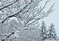 Première neige - panoramio.jpg