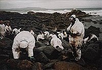 Volunteers cleaning up the aftermath of the Prestige oil spill