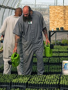 Two men in overalls watering seedlings with watering cans.