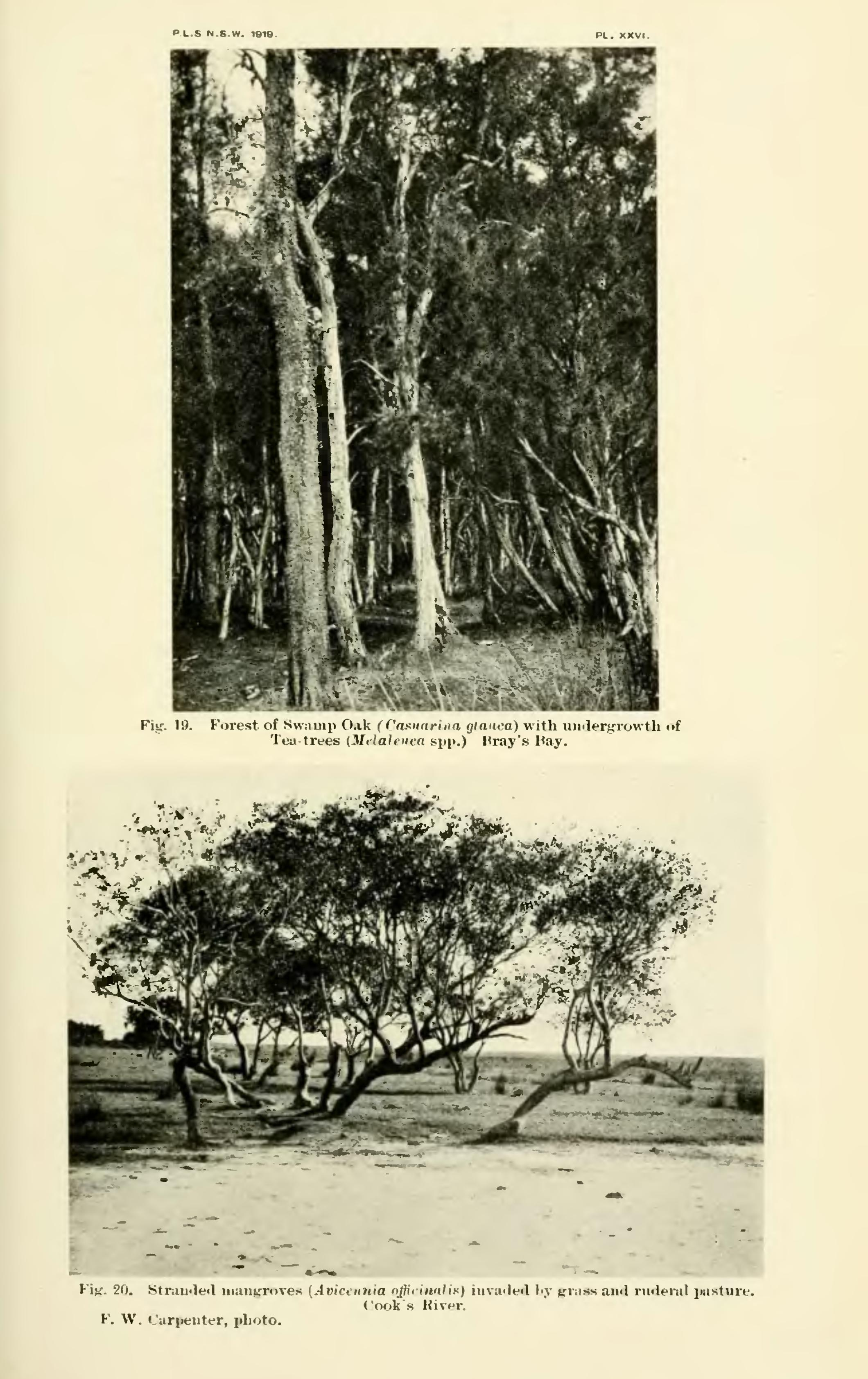 Page:Proceedings of the Linnean Society of New South Wales ...
