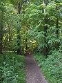 Public Footpath in Little Wold Plantation - geograph.org.uk - 287461.jpg