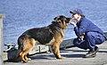 Puppy Kisses (32812033543).jpg