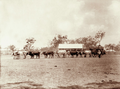 Queensland State Archives 2473 Bullock dray with wool from Yandilla 1898.png