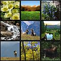 RMNP collage 2.jpg
