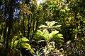 Rain forest near Monroe Beach - panoramio (3).jpg