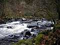 Rapids on River Braan - geograph.org.uk - 1779947.jpg