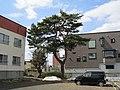 Red Pine of Soyama Clan.jpg