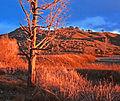 Red Tree (3379516837).jpg