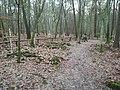 Red trail in Wielkopolski National Park (groby powstancow 1848).jpg