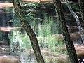 Reflection Crabtree Creek Company Mill Trail Umstead NC SP 0049 (3583751198).jpg
