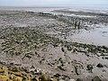 Remains of putcher ranks, Severn Estuary - geograph.org.uk - 750775.jpg