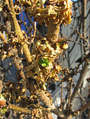 Remains of torched trash containers (new growth on shrub).png