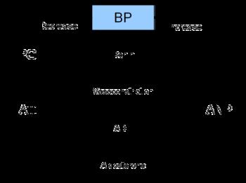 Concept Map Renin Angiotensin Aldosterone Mechanism.Renin Angiotensin System Wikipedia