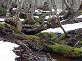 Reserva Nacional Magallanes, Punta Arenas, Chile.jpg